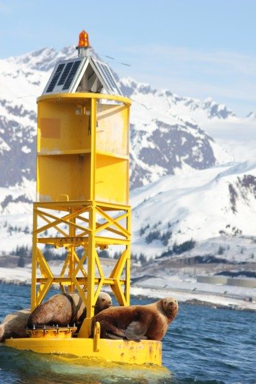 Seals sitting on a buoy